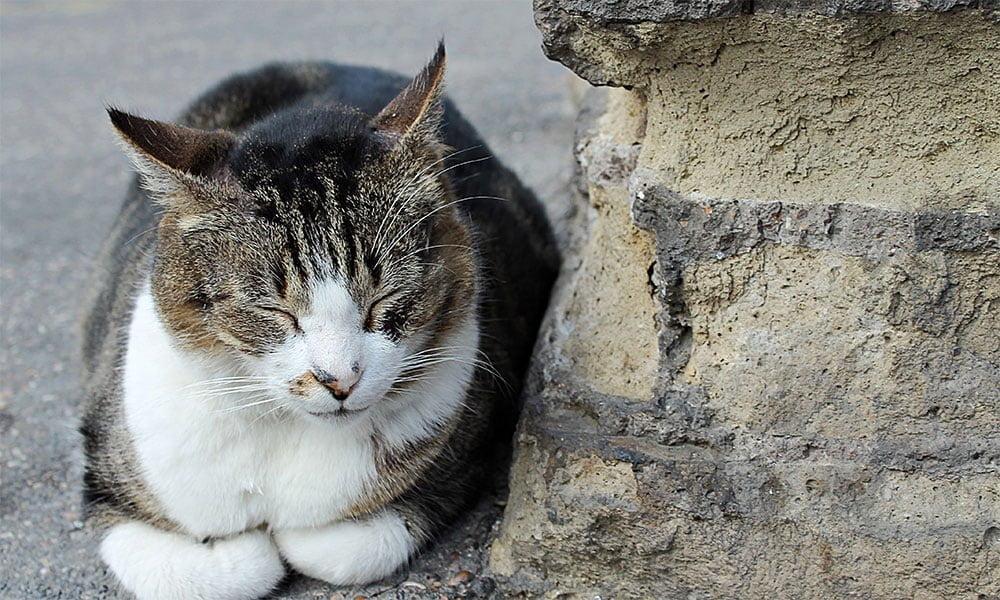 Kuriose Geschichten und Plätze - Eine Katze in Rom