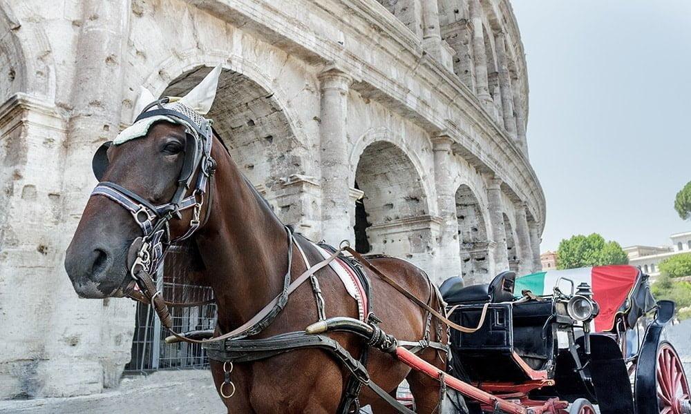 My Rome - Botticella romana